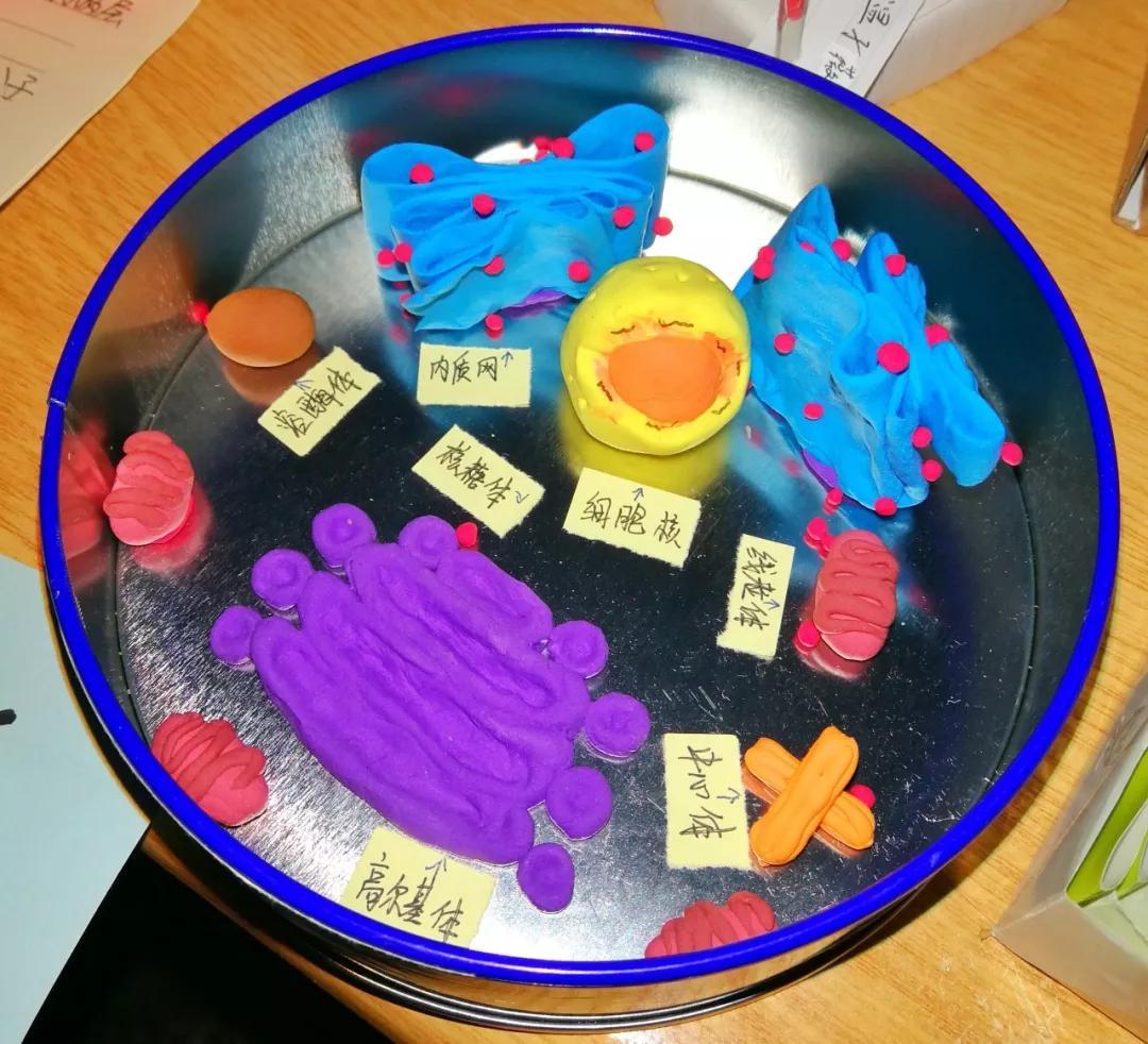 一等奖:动物细胞亚显微结构模型